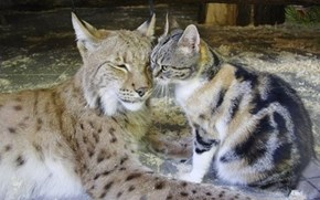 Their Love Lynx Them Together