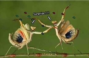 Surprise ! ! !