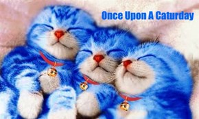 Once Upon A Caturday