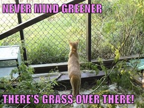 NEVER MIND GREENER  THERE'S GRASS OVER THERE!