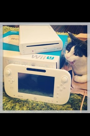 Even Cats Are in Awe of the Wii U