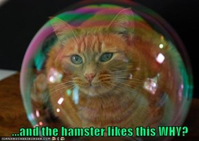 ...and the hamster likes this WHY?