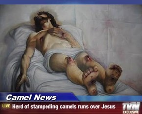 Camel News - Herd of stampeding camels runs over Jesus