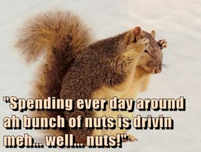 """Spending ever day around ah bunch of nuts is drivin meh... well... nuts!"""