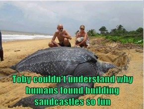 Toby couldn't understand why humans found building sandcastles so fun