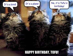 Happy Birthday, Tofu!