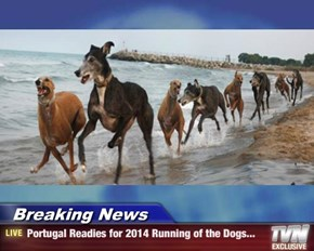 Breaking News - Portugal Readies for 2014 Running of the Dogs...