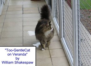 """Too-GentleCat on Veranda"" by William Shakespaw"