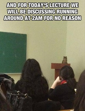 Even the Teacher Slept Through This Class