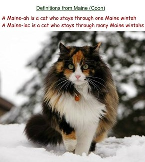 Definitions from Maine (Coon)
