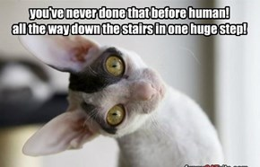 you've never done that before human! all the way down the stairs in one huge step!