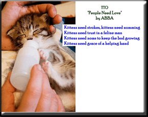 """Kittens Need Noms"" (TTO ""People Need Love"" by ABBA)"