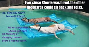 Ever since Stewie was hired, the other lifeguards could sit back and relax.