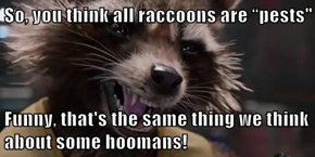 """So, you think all raccoons are """"pests""""  Funny, that's the same thing we think about some hoomans!"""