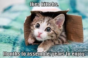 Ikea kittehs.  Months to assemble, years to enjoy.