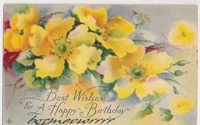 Happy Birthday, bgcmeowrrrr