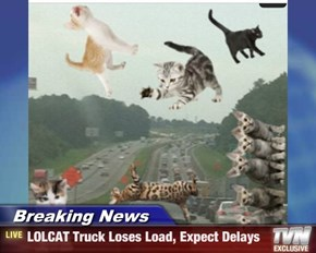 Breaking News - LOLCAT Truck Loses Load, Expect Delays