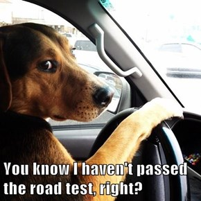 You know I haven't passed the road test, right?