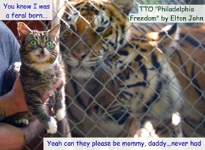 """At tiger's Kingdom"" (TTO ""Philadelphia Freedom"" by Elton John)"