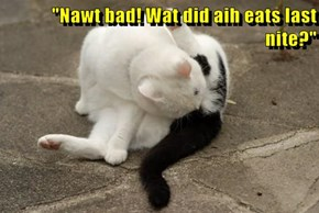 """Nawt bad! Wat did aih eats last nite?"""