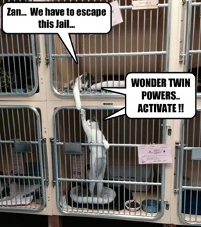 Zan...  We have to escape this Jail...