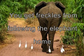 You get freckles from following the elephant home