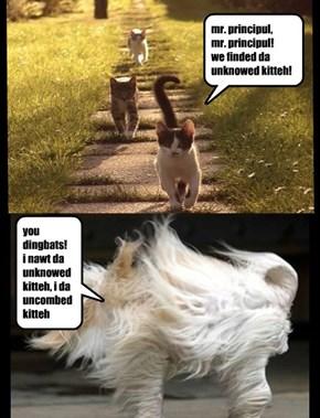 has da unknowed kitteh been found?