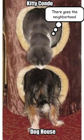 Pet Duplex