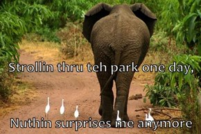 Strollin thru teh park one day,   Nuthin surprises me anymore