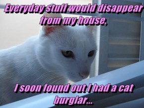 Everyday stuff would disappear from my house,  I soon found out I had a cat burglar...