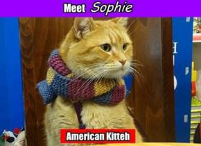 American Kitteh