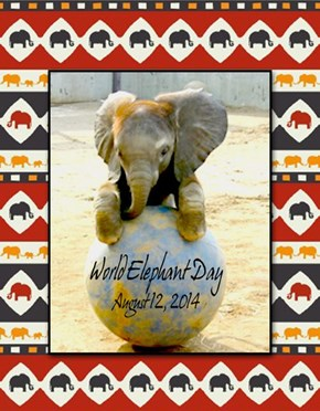 World Elephant Day, August 12, 2014