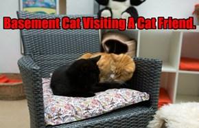 Basement Cat Visiting A Cat Friend.