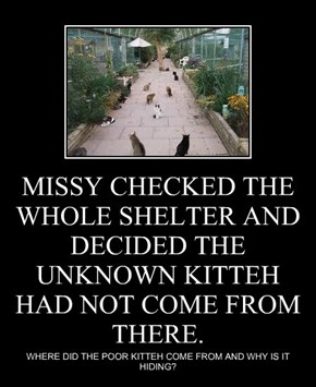 MISSY CHECKED THE WHOLE SHELTER AND DECIDED THE UNKNOWN KITTEH HAD NOT COME FROM THERE.