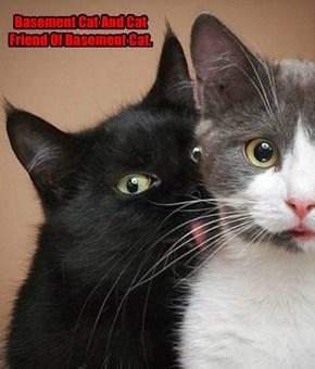 Basement Cat And Cat Friend Of Basement Cat.