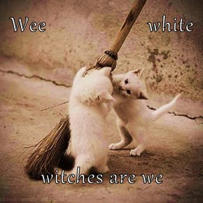 Wee                   white  witches are we