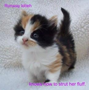Runway kitteh