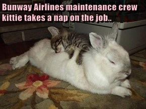 Bunway Airlines maintenance crew kittie takes a nap on the job..