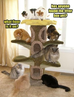 has anyone found the litter box yet?