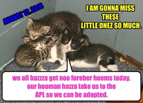 we all hazzza get noo fureber hoems today.   our hooman hazza take us to the  APL so we can be adopted.