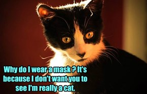 Why do I wear a mask ? It's because I don't want you to see I'm really a cat.