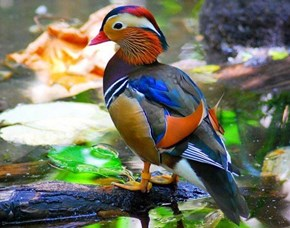 Colorful Squee