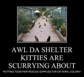 AWL DA SHELTER KITTIES ARE SCURRYING ABOUT