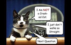 Tricky Dickie Kitty