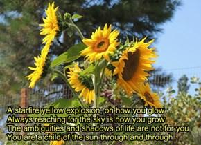 Sunflowers for Jiskat