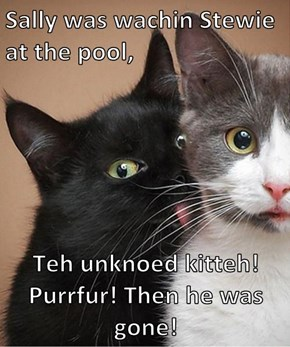 Sally was wachin Stewie at the pool,   Teh unknoed kitteh! Purrfur! Then he was gone!