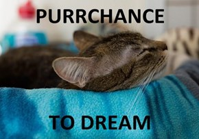 PURRCHANCE  TO DREAM