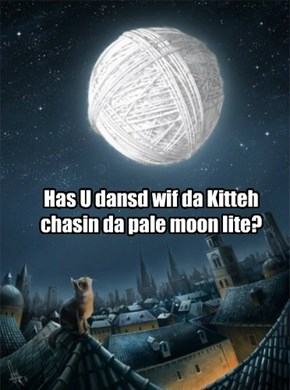 Has U dansd wif da Kitteh chasin da pale moon lite?