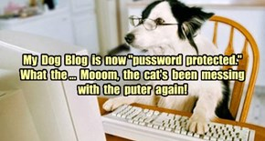 "My  Dog  Blog  is  now ""pussword  protected.""  What  the ...  Mooom,  the  cat's  been  messing  with  the  puter  again!"