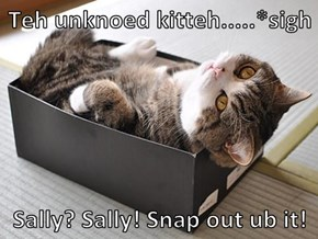 Teh unknoed kitteh.....*sigh  Sally? Sally! Snap out ub it!